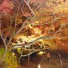 【太宰府】竈門神社の紅葉が見頃 ライトアップを見てきた[もみじ祭り]