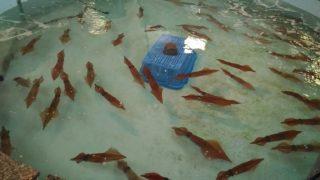 【福津】津屋崎の穴場スポット、お魚センターうみがめ