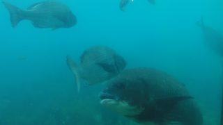【唐津】波戸岬にある天然の水族館、玄界海中展望塔