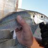 【相島】子供と相島で夜釣り、中型のアジが大漁