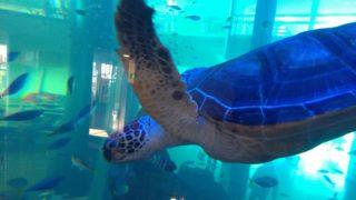 【博多】ベイサイドプレイスのアクアリウムは無料で水族館気分を味わえる穴場スポット