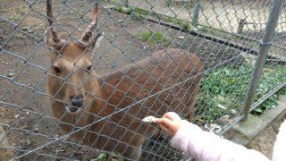 【太宰府】鹿が居て子供が喜ぶ、竈門神社は混雑控えめな良初詣スポット